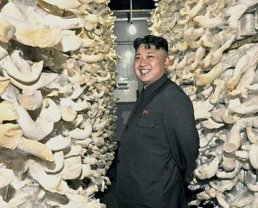 Kim Jong-un gets up close with mushrooms